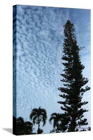 Cedar Palm Sky Vertical-Robert Goldwitz-Stretched Canvas Print