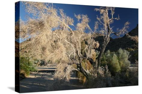 Desert Brilliance-Robert Goldwitz-Stretched Canvas Print