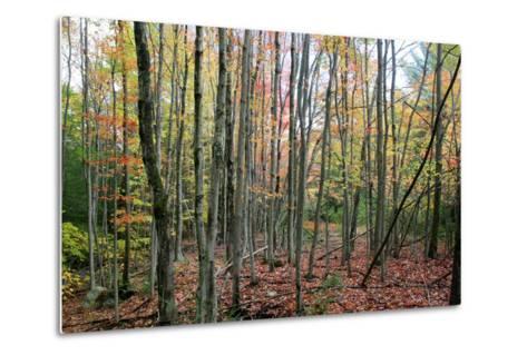 Grey Tree Stand Autumn-Robert Goldwitz-Metal Print