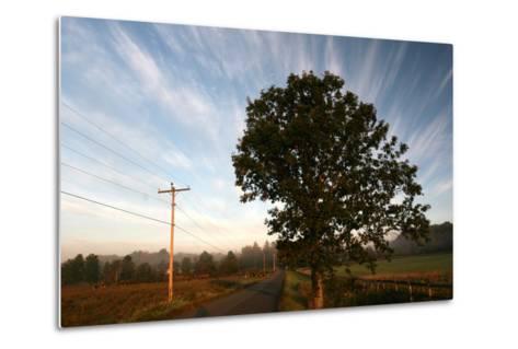Tree Pole Road Sky-Robert Goldwitz-Metal Print