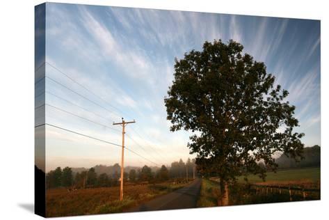 Tree Pole Road Sky-Robert Goldwitz-Stretched Canvas Print