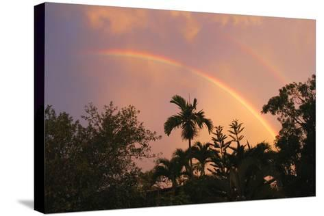 Rainbow Palms-Robert Goldwitz-Stretched Canvas Print