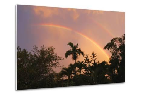 Rainbow Palms-Robert Goldwitz-Metal Print