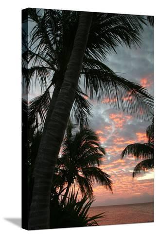 Palm Sunrise Vertical-Robert Goldwitz-Stretched Canvas Print