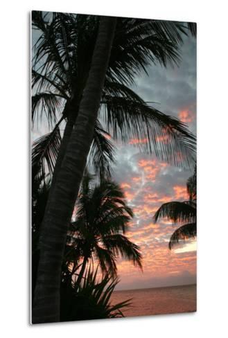 Palm Sunrise Vertical-Robert Goldwitz-Metal Print