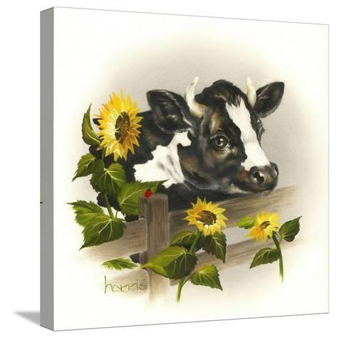 Bull and Sunflowers-Peggy Harris-Stretched Canvas Print