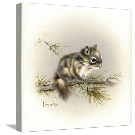 Tattle-Tail Baby-Peggy Harris-Stretched Canvas Print