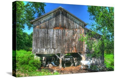 Old Barn and Cows-Robert Goldwitz-Stretched Canvas Print