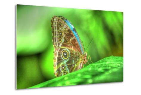 Butterfly 9-Robert Goldwitz-Metal Print
