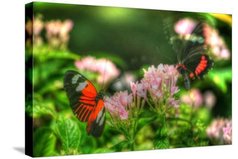 Butterfly 11-Robert Goldwitz-Stretched Canvas Print