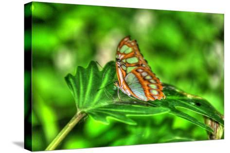 Butterfly 10-Robert Goldwitz-Stretched Canvas Print