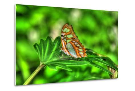 Butterfly 10-Robert Goldwitz-Metal Print