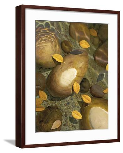 Wading-Stephen Stavast-Framed Art Print