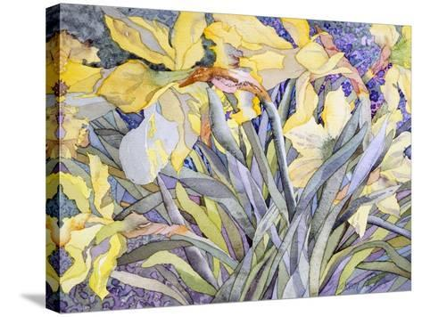 Daffodils, Van Vleck-Sharon Pitts-Stretched Canvas Print