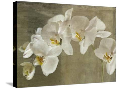 Painted Orchid-Symposium Design-Stretched Canvas Print