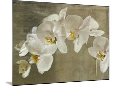 Painted Orchid-Symposium Design-Mounted Giclee Print