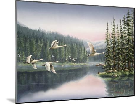Swans at Sunrise-Wanda Mumm-Mounted Giclee Print