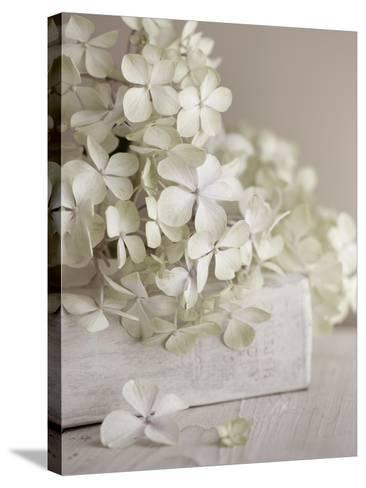 White Flowers-Symposium Design-Stretched Canvas Print