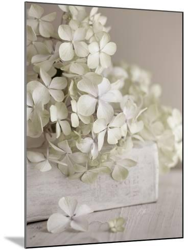 White Flowers-Symposium Design-Mounted Giclee Print