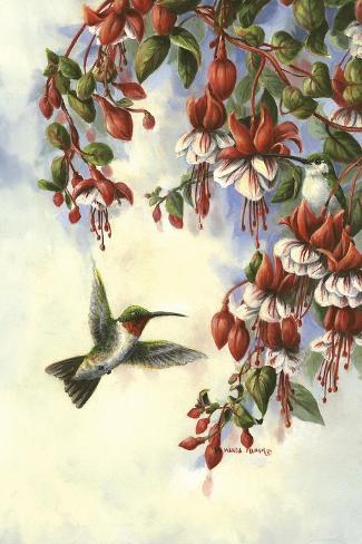 Hummingbird D-Wanda Mumm-Stretched Canvas Print