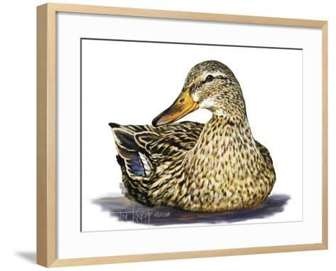 Mallard Duck-Tim Knepp-Framed Art Print