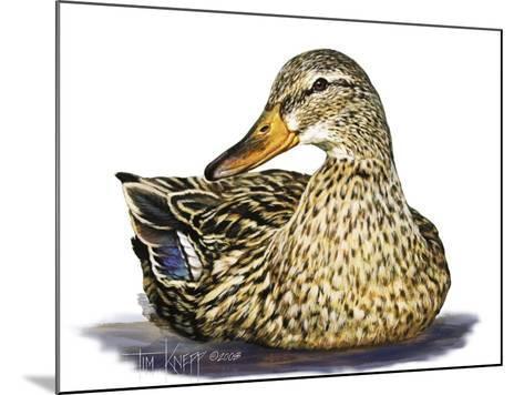 Mallard Duck-Tim Knepp-Mounted Giclee Print
