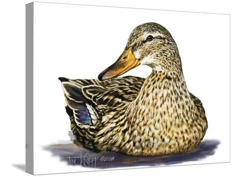 Mallard Duck-Tim Knepp-Stretched Canvas Print