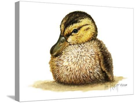 Duckling-Tim Knepp-Stretched Canvas Print