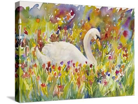 Colorful Swan-Sarah Davis-Stretched Canvas Print