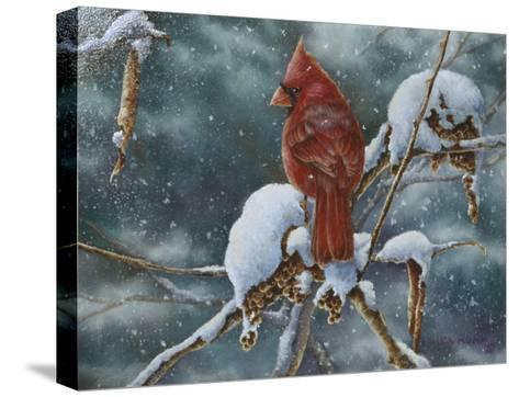 December Delight-Wanda Mumm-Stretched Canvas Print