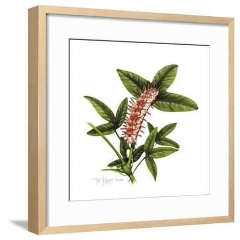 Julia Caterpillar-Tim Knepp-Framed Art Print