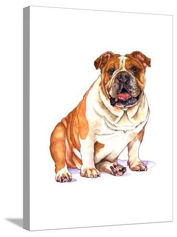 Bulldog-Wendy Edelson-Stretched Canvas Print