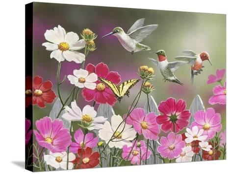 Cosmos and Hummingbirds-William Vanderdasson-Stretched Canvas Print