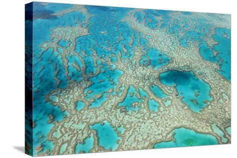 Aerial View of the Great Barrier Reef, Queensland, Australia-Peter Adams-Stretched Canvas Print