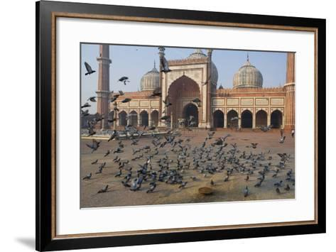 Pigeons in Mosque, Jama Masjid Mosque, Delhi, India-Peter Adams-Framed Art Print