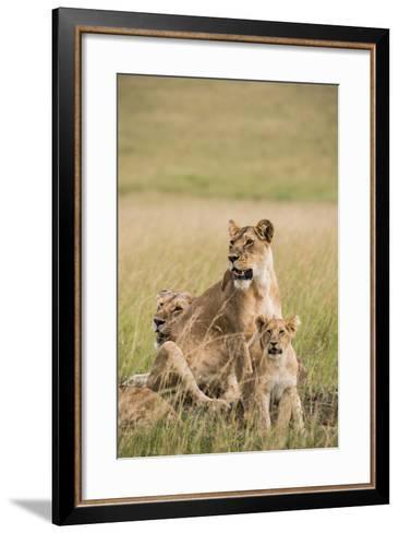 Kenya, Maasai Mara, Mara Triangle, Mara River Basin, Lioness with Cubs-Alison Jones-Framed Art Print