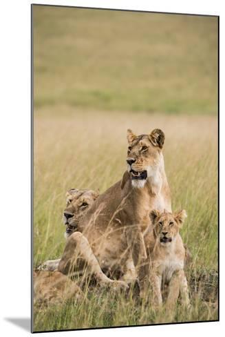 Kenya, Maasai Mara, Mara Triangle, Mara River Basin, Lioness with Cubs-Alison Jones-Mounted Photographic Print