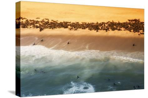 Skeleton Coast, Namibia. Abstract View of a Colony of Cape Fur Seals-Janet Muir-Stretched Canvas Print