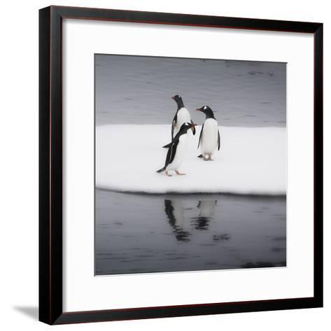 Antarctica. Gentoo Penguins Standing on Sea Ice with Reflection-Janet Muir-Framed Art Print
