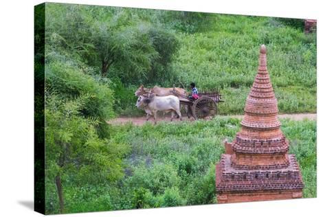 Farmer Driving an Ox-Cart, Bagan, Mandalay Region, Myanmar-Keren Su-Stretched Canvas Print