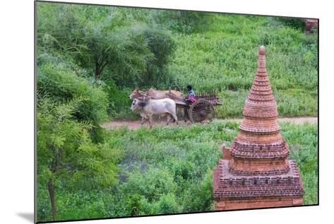 Farmer Driving an Ox-Cart, Bagan, Mandalay Region, Myanmar-Keren Su-Mounted Photographic Print