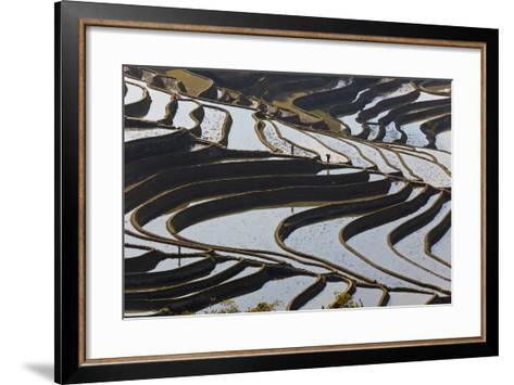 Reflections Off Water Filled Rice Terraces, Yuanyang, Honghe, China-Peter Adams-Framed Art Print