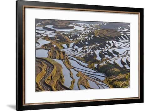 Reflections Off Water Filled Rice Terraces, Yuanyang, Honghe, China-Peter Adams-Framed Art Print