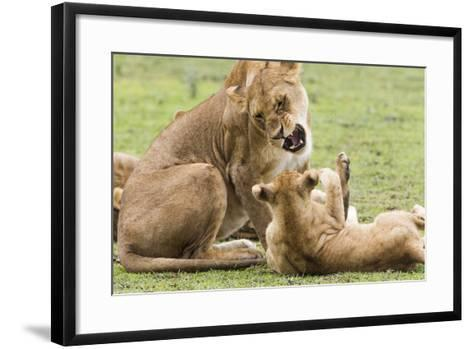 Sitting Lioness Snarling at Reclining Cub, Ngorongoro, Tanzania-James Heupel-Framed Art Print