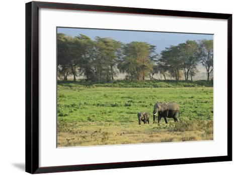 Kenya, Amboseli NP, Elephant Mother Playing with Dust with Calf-Anthony Asael-Framed Art Print