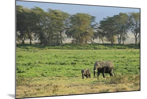 Kenya, Amboseli NP, Elephant Mother Playing with Dust with Calf-Anthony Asael-Mounted Photographic Print