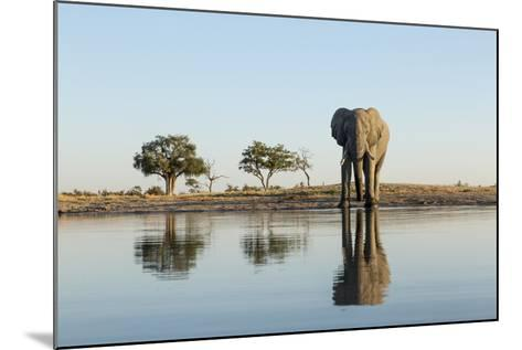 Botswana, Chobe NP, African Elephant at Water Hole in Savuti Marsh-Paul Souders-Mounted Photographic Print