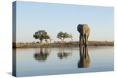 Botswana, Chobe NP, African Elephant at Water Hole in Savuti Marsh-Paul Souders-Stretched Canvas Print
