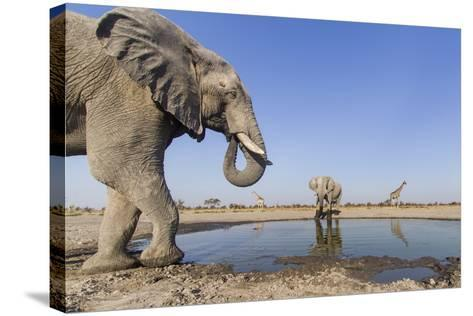 Botswana, Chobe National Park, Elephants and Giraffes at a Water Hole-Paul Souders-Stretched Canvas Print