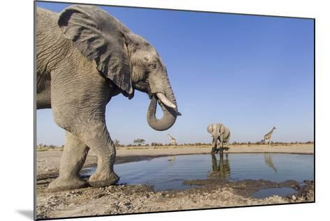 Botswana, Chobe National Park, Elephants and Giraffes at a Water Hole-Paul Souders-Mounted Photographic Print